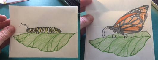 Two images, one with a drawing on an envelope of a monarch caterpillar on a leaf, and another picture where the flap on the envelope opens to reveal a monarch butterfly on a leaf.