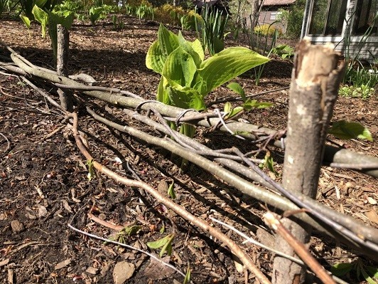 sticks woven into a tiny fence around a garden of plants